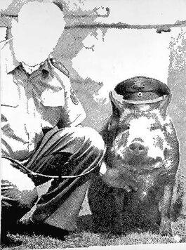 Polke: Police Pig