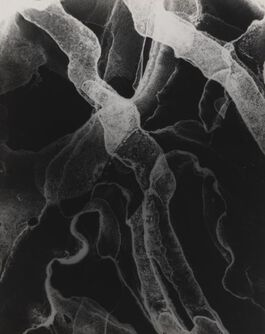 Alternative Photography Processes: Chemigrams