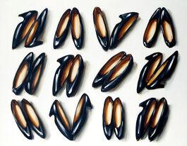 Lisa Milroy: Shoes