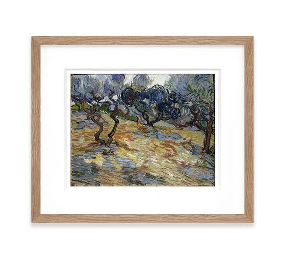 Vincent van Gogh: Olive Trees framed print