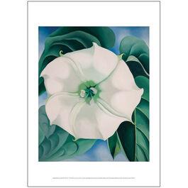Georgia O'Keeffe Jimson Weed, White Flower No.1 poster