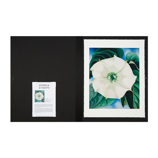 Georgia okeeffe jimson weed white flower no1 folio tate georgia okeeffe jimson weed white flower no1 folio mightylinksfo