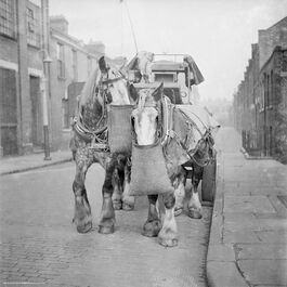Nigel Henderson: Two horses pulling a carriage