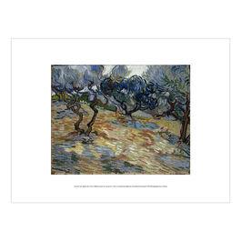 Vincent van Gogh: Olive Trees exhibition print
