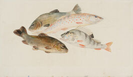 Turner: Study of Fish
