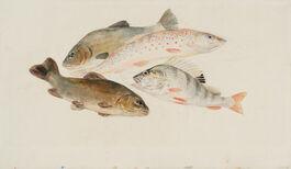 Turner: Study of Fish