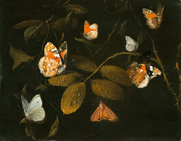 William Gow Ferguson: Six Butterflies and a Moth on a Rose Branch