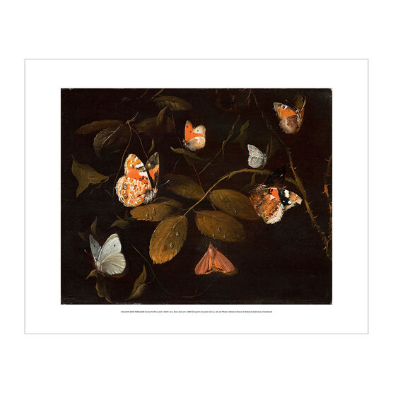 William Gow Ferguson: Six Butterflies and a Moth on a Rose Branch mini print